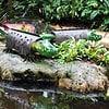 oo_croco_light-object_green_flamingo-gardens_wb-IMG_0656