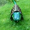 oo_croco_light-object_green_wmh_Perry-Lyman